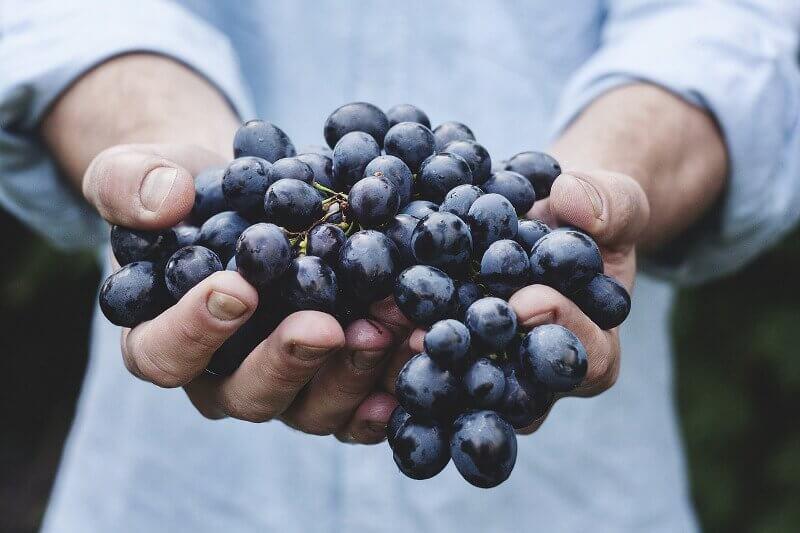 Raisins de Bordeaux