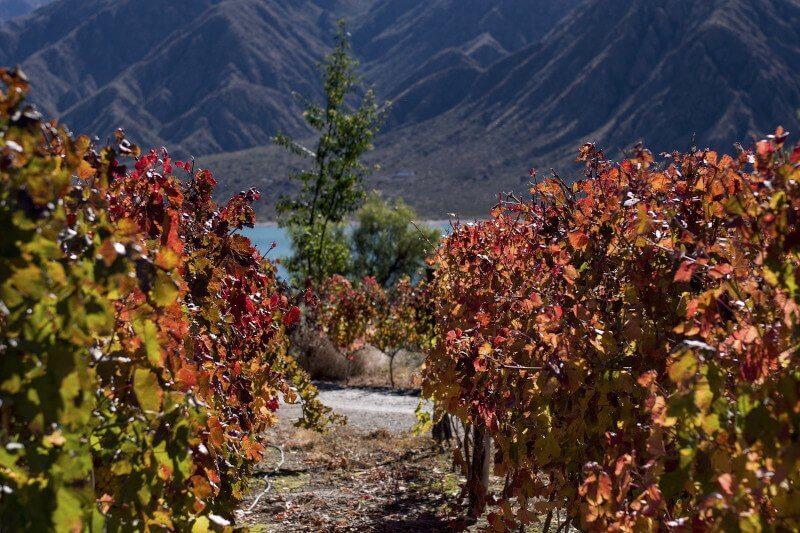 Vignoble en Amérique du Sud